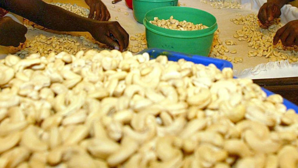 Crise de la noix de cajou en Guinée-Bissau: le Sénégal à la rescousse