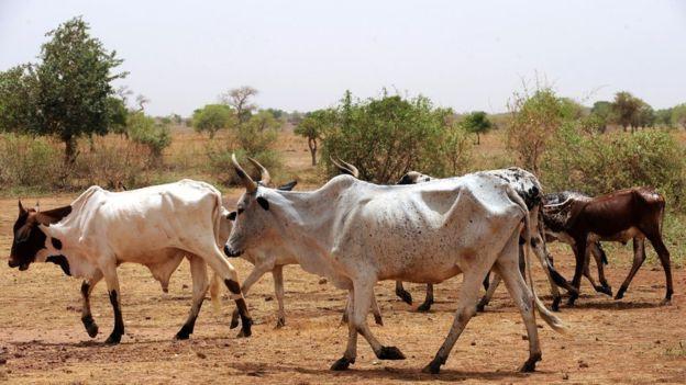 Burkina : deux millions de personnes menacées par la famine