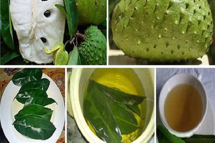  Les feuilles de corossol : un remède miracle pour lutter contre les cellules cancéreuses