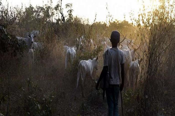 Plus de 200 morts dans des affrontements entre éleveurs et agriculteurs au Nigeria