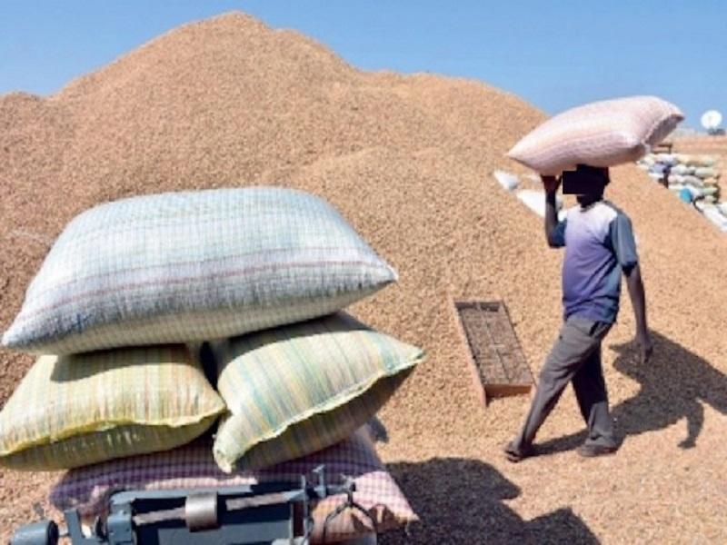 Commercialisation de l'arachide : Macky Sall offre un cadeau de Noël aux cultivateurs