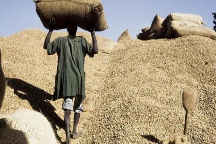 Ziguinchor : les opérateurs s'insurgent contre la lente réception de l'arachide