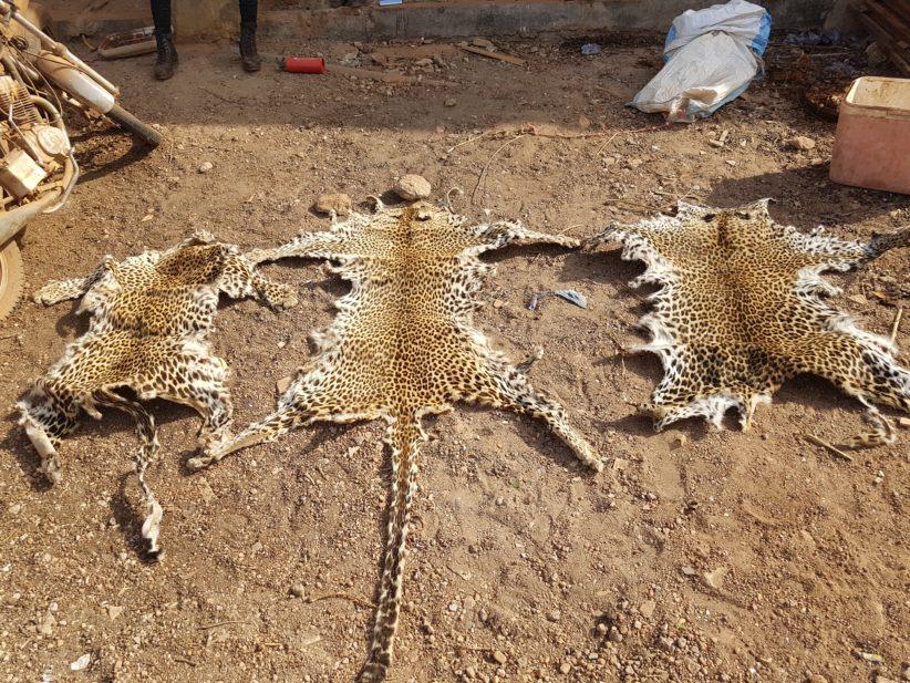 Kédougou : trois présumés trafiquants d'animaux arrêtés
