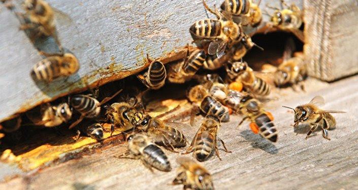 Les abeilles envahissent un village de Kaffrine et tue un enfant de 7 ans