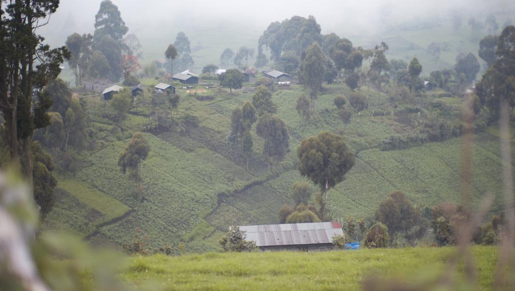 RDC: dans le Masisi, insécurité et déplacements de population riment avec viols