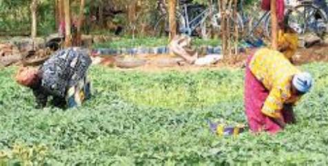Financement des éleveurs et agriculteurs: la Suisse décaisse plus de 5 milliards F CFA