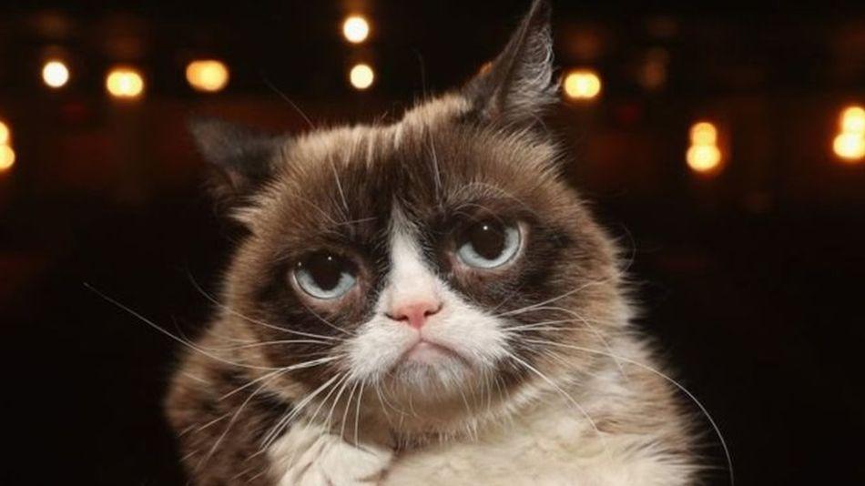 Grumpy Cat, la chatte star d'Internet, est décédée