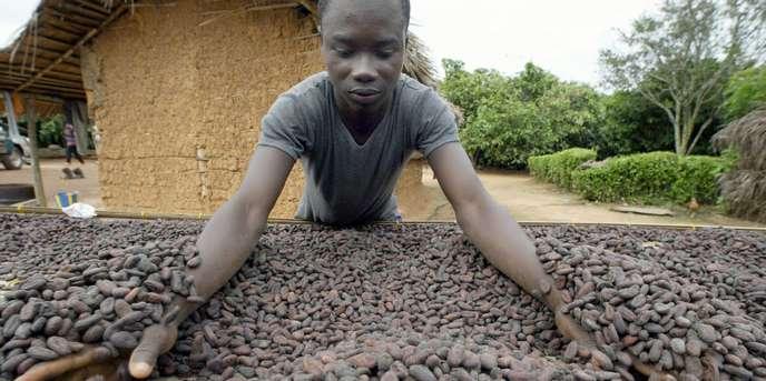 Menace sur le chocolat après la suspension des ventes de cacao du Ghana et de la Côte d'Ivoire