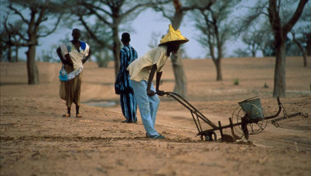 Sénégal : les paysans demandent la baisse du prix des intrants
