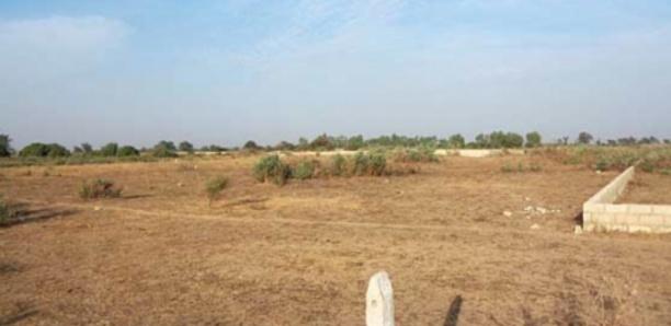 Litige foncier à Mbane : les populations s'opposent à la vente de 8 000 hectares de leur terre