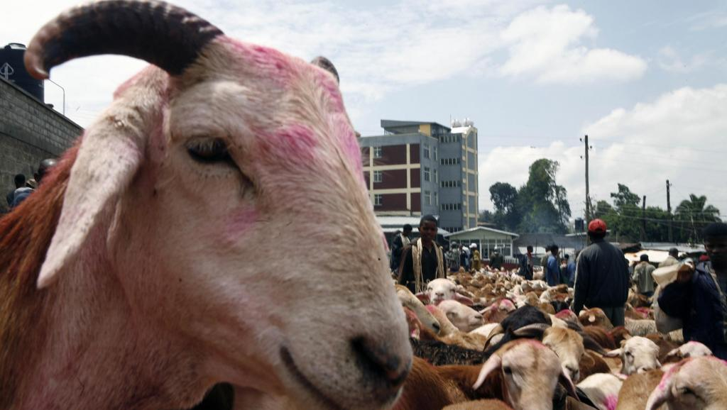 Un Aïd au goût d'unité pour les musulmans d'Éthiopie