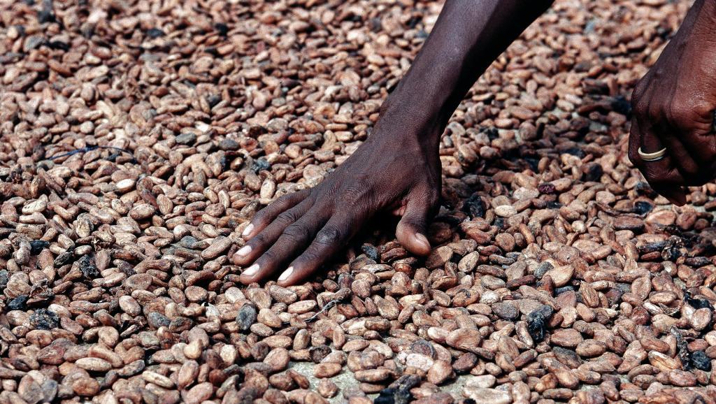 Côte d'Ivoire, Ghana et acteurs du cacao d'accord pour une filière plus durable