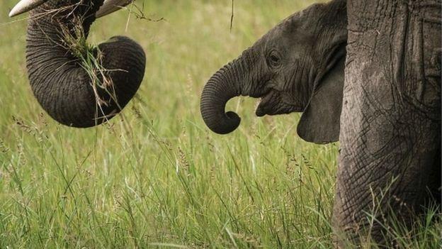 55 éléphants morts de faim et de soif au Zimbabwe