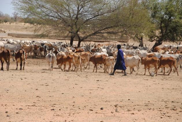 La Journée nationale de l'élevage, prévue le 28 novembre prochain