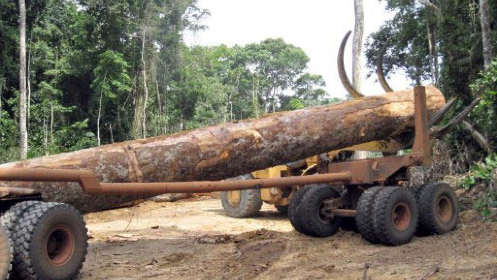 Un tiers des plantes tropicales africaines risquent de disparaître