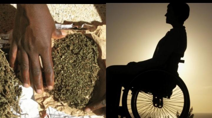 Trafic de chanvre indien: Un handicapé de 72 ans et ses clients tombent à Touba