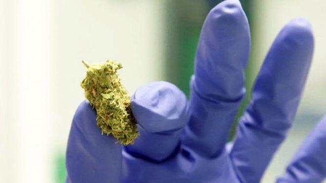Deux médicaments à base de cannabis, utilisés pour traiter l'épilepsie et la sclérose en plaques, ont été approuvés par le NHS en Angleterre.  Il suit les nouvelles lignes directrices de l'organisme consultatif sur les médicaments NICE, qui a examiné