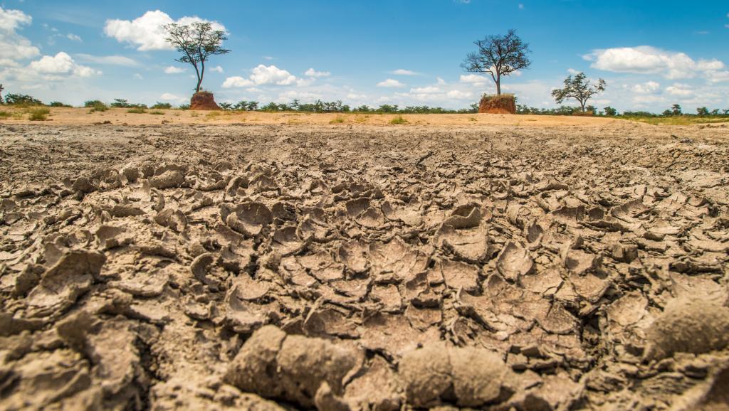 Afrique australe: 45 millions de personnes menacées par la famine