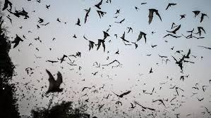 """Coronavirus : """"Il est primordial d'enquêter sur l'origine animale de la pandémie"""""""