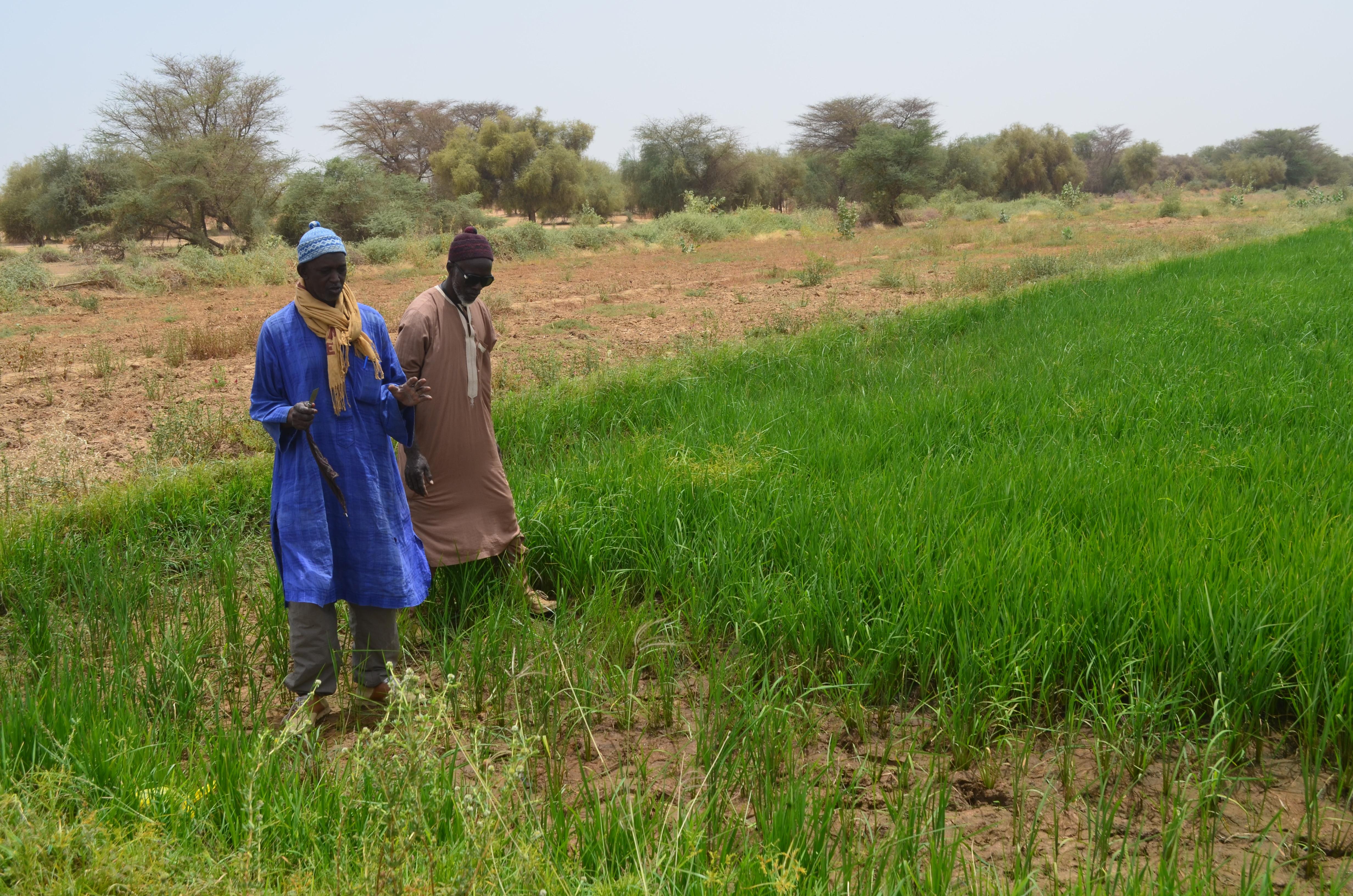 Quand les modes de gestion du Covid19 nous interpellent sur la gestion des réformes foncières en Afrique de l'Ouest ! (Opinion)