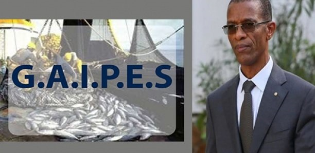 Licences illégales de Pêche: Réponse du GAIPES au ministre de la Pêche