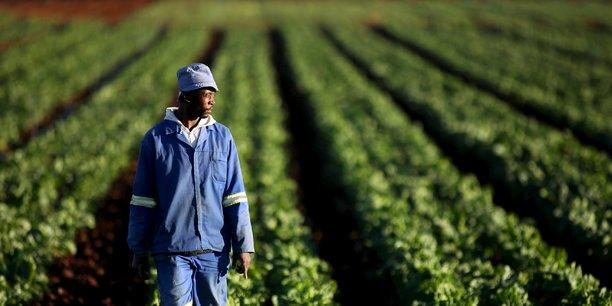 Un financement de 54 milliards pour l'entrepreneuriat agricole des jeunes sénégalais