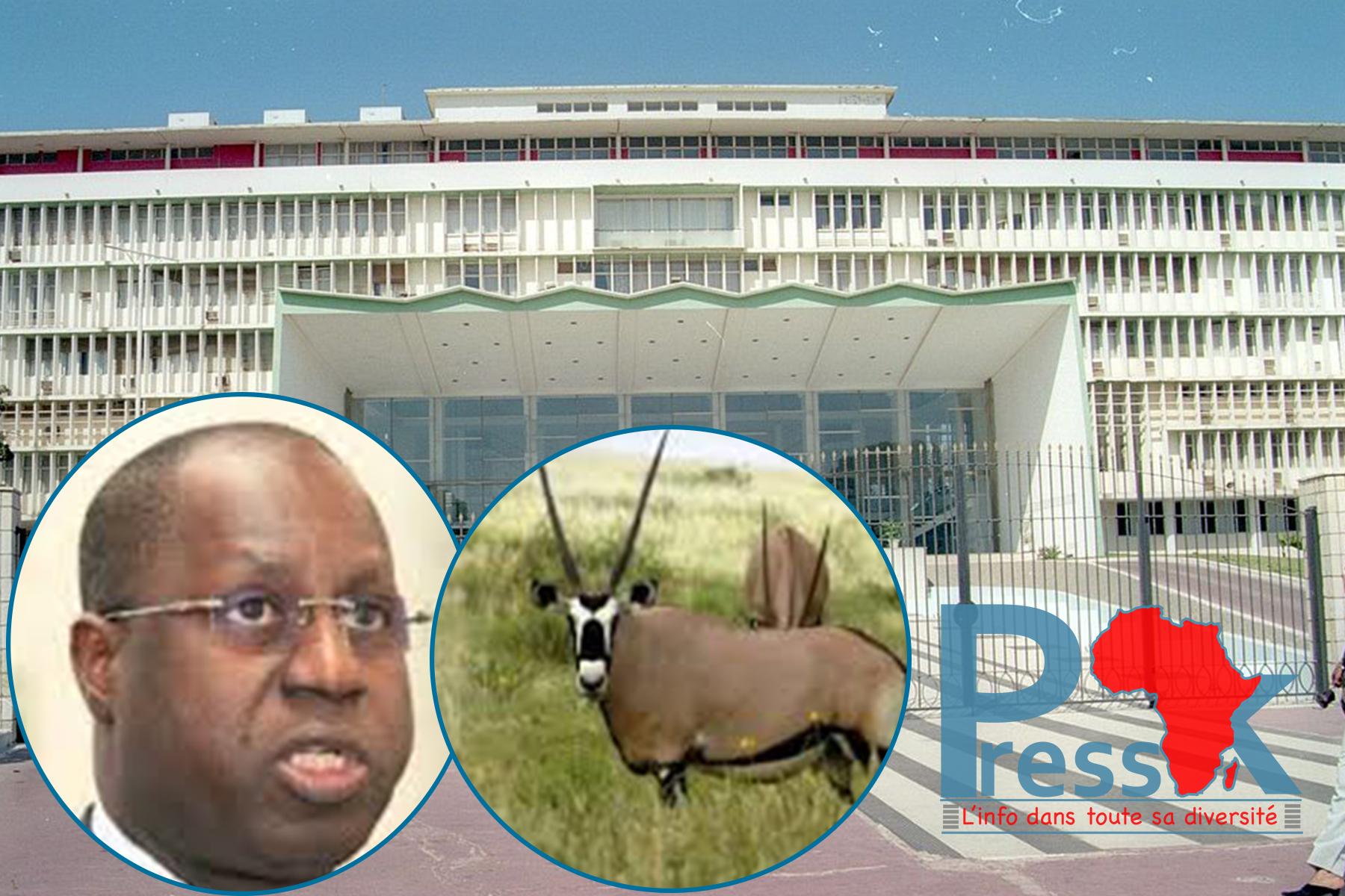 La députée Marème Soda Ndiaye porte la cause des gazelles Oryx à l'Assemblée nationale (Question écrite)