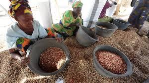 Secteur arachidier sénégalais: les agriculteurs se ruent vers les Chinois et leur argent, les huiliers agonisent