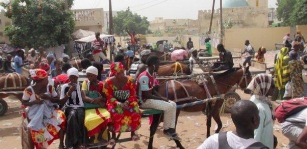 Magal 2020: 40.000 charretiers attendus à Touba