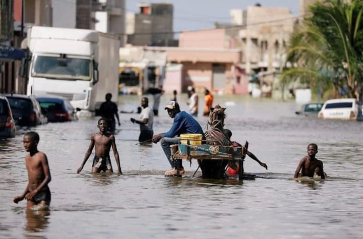 #Inondations - 624 millions distribués via Cash Transfer à 3816 ménages à Dakar et Saint-Louis