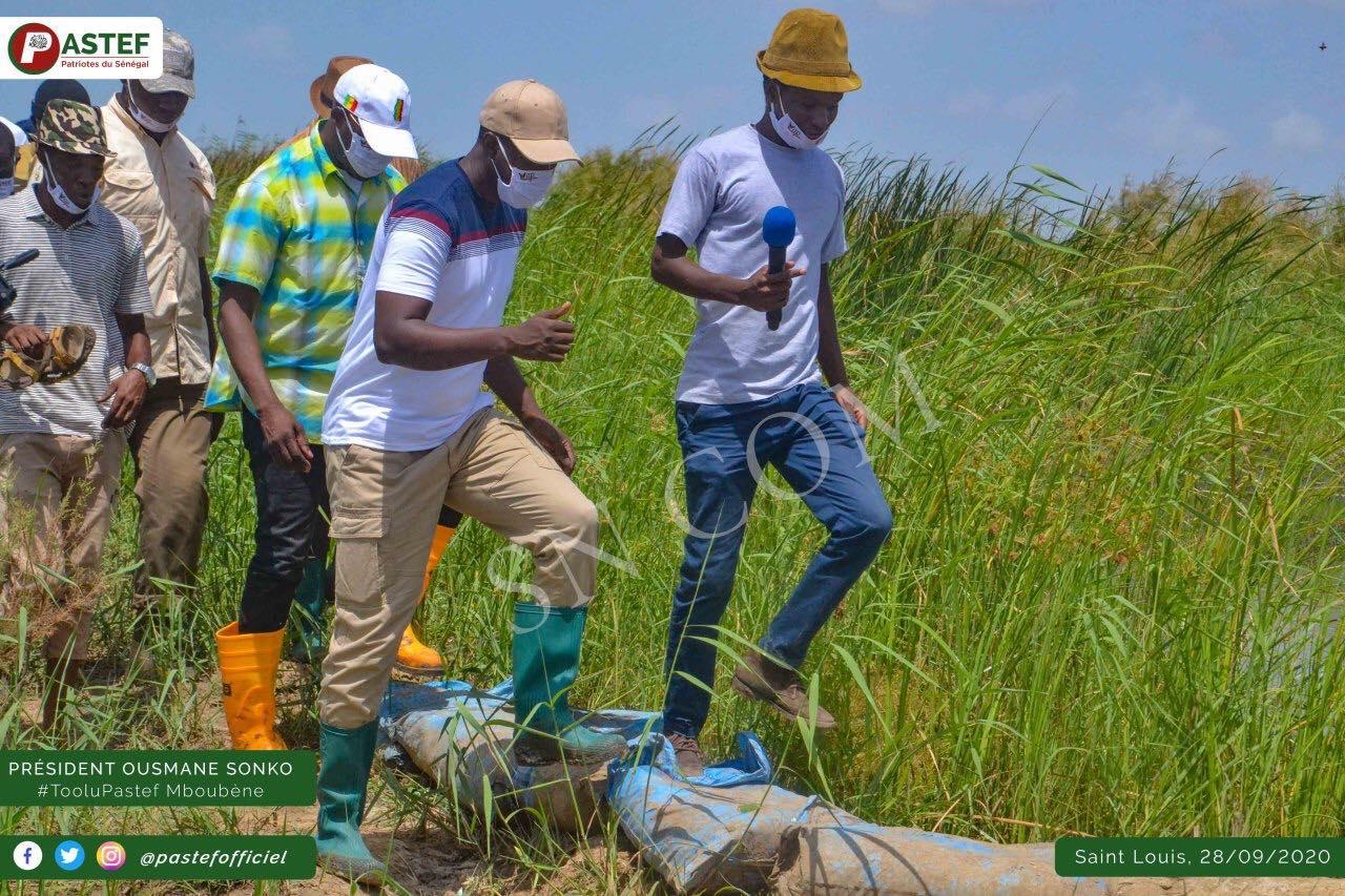 Ousmane Sonko appelle les jeunes de Pastef à se rendre à Xelkoom participer aux récoltes des champs de Serigne Saliou