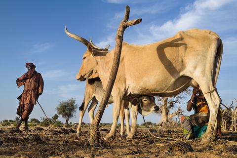 Les laiteries, une source d'emplois contre l'émigration clandestine, selon un inspecteur de la Jeunesse