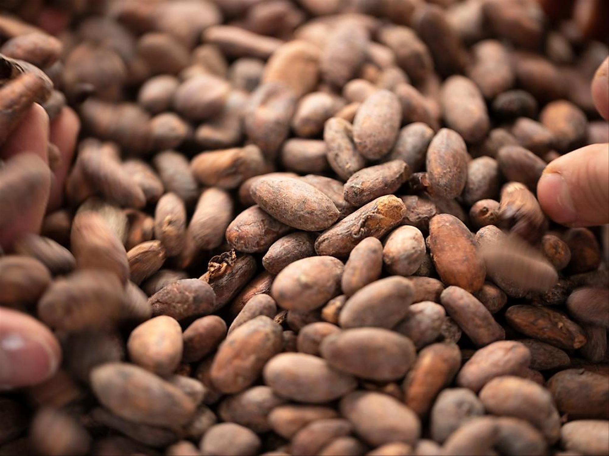Le Conseil Café Cacao (CCC) de Côte d'Ivoire lève les sanctions contre le groupe chocolatier Hersey