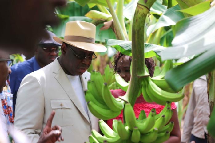 """""""Embargo"""" de la Guinée sur les fruits: pénurie de bananes à Dakar !"""