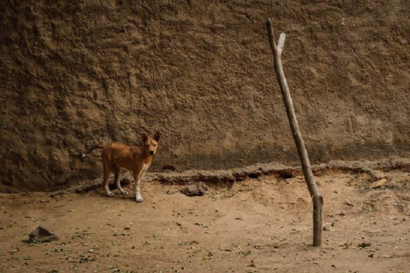 Au Mali, le trafic de viande de chien, un business qui prospère chez les plus démunis