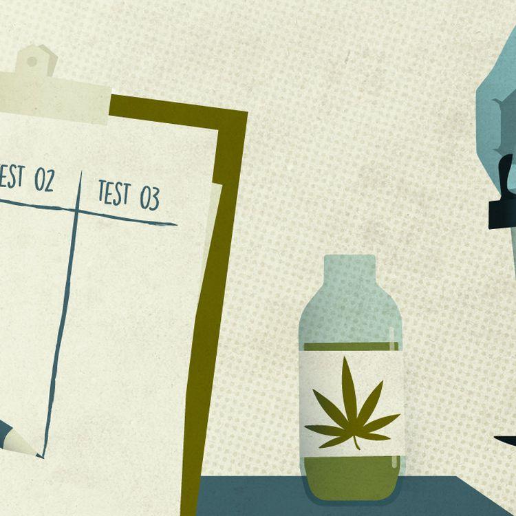 La France lance son expérimentation du cannabis médical