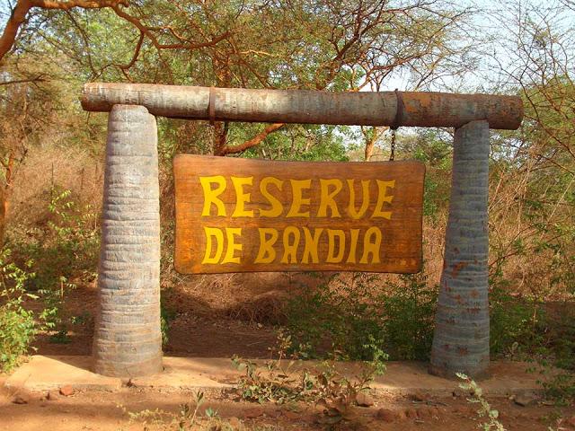 Mbour: une bataille rangée dans la forêt de Bandia fait deux blessés graves