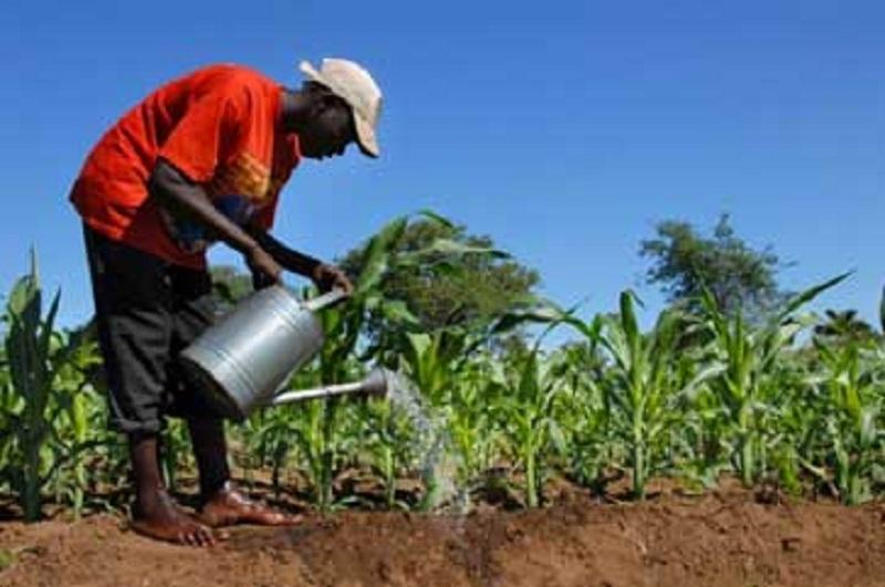 Mali : la BAD appuiera la création d'agropoles et l'emploi féminin dans les chaînes de valeur agricoles