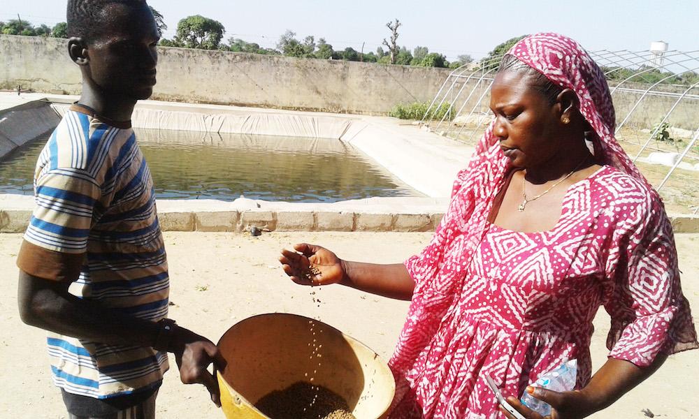 Projet Pôles aquacoles au Sénégal: un milliard injecté pour industrialiser la filière de l'aquaculture