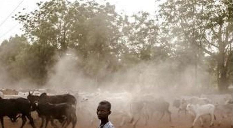 Nigeria: 53 personnes tuées par des voleurs de bétail dans le nord-ouest du pays