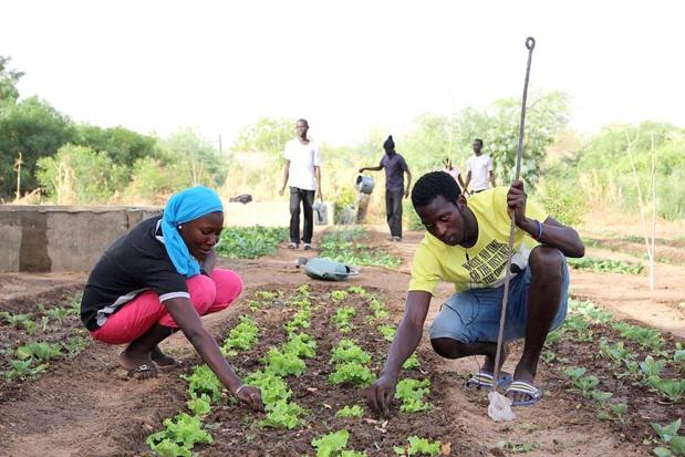 AECID et ANIDA organisent un forum virtuel sur l'agriculture familiale et l'agroécologie au Sénégal