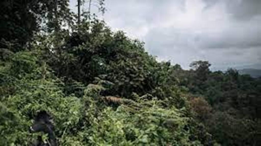 RDC : des ONG dénoncent l'octroi « illégal » de concessions de forêt à l'entreprise Tradelink