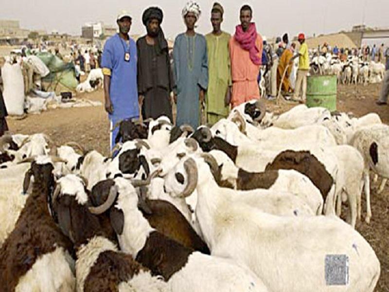 Tabaski 2021: plus de 13.000 moutons invendus dont 5.000 à Dakar (Ministre)
