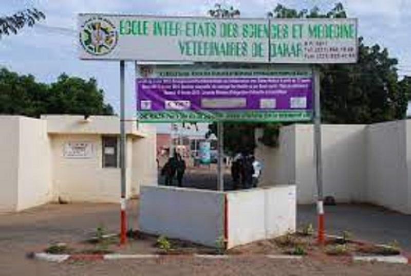 École Inter-États de Médecine Vétérinaire : Des étudiants renvoyés des salles d'examen à cause des arriérés de paiement