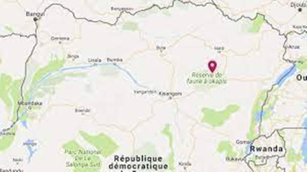 RDC: appel des ONGs à la protection de la réserve de faune à Okapis