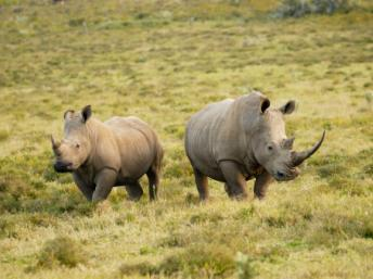 Rhinocéros. Getty Images/Juergen Ritterbach