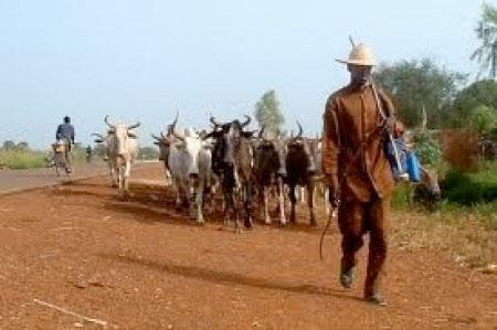 Affrontements à Kiriki-Sédhiou : un voleur de bétails tué par balle