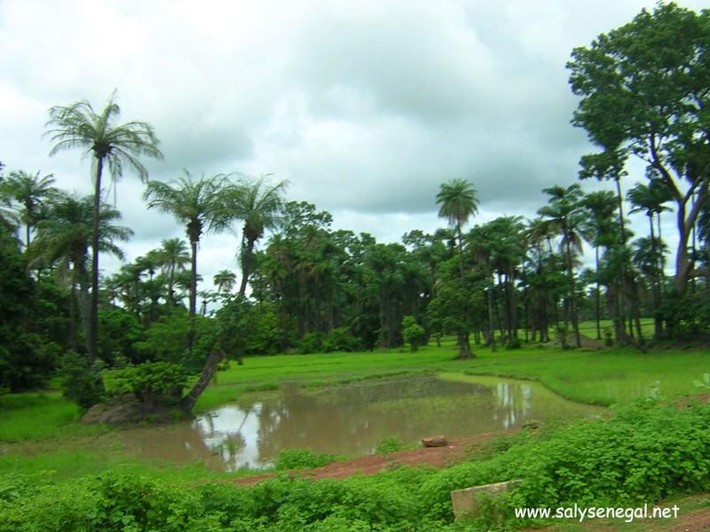 Contribution : Processus de Paix en Casamance, un éternel recommencement