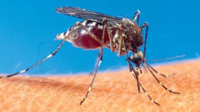 Le Sénégal montre l'exemple dans la lutte pour éradiquer le paludisme