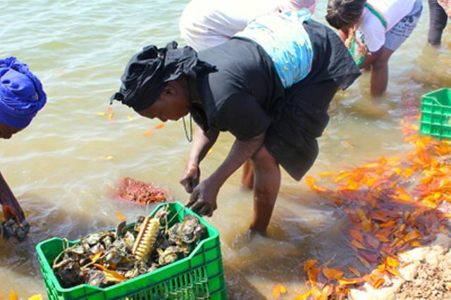 Les perles de la Casamance : Les ostréicultrices sénégalaises, pionnières du développement durable